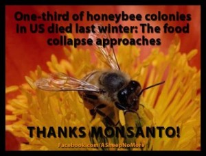 One third of honey bee colonies died last winter thanks monsanto